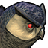 Black Owlbear